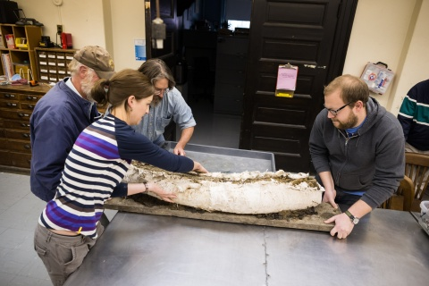 Image of archaeology students moving an artifact.